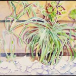 Spider Plants, watercolor on Arches paper, 26 x 40 inches